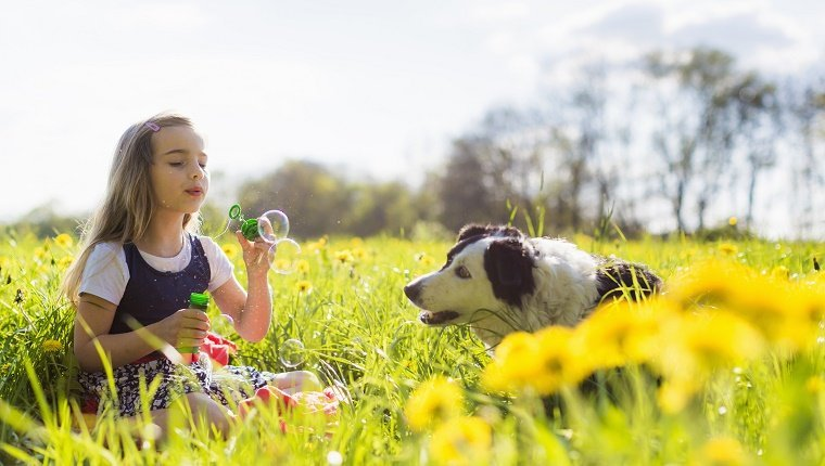 Girl blowing bubbles with dog in field