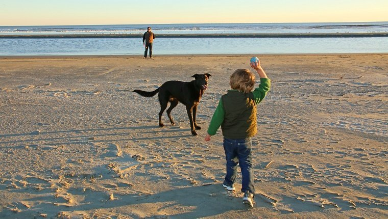 A little boy and his father playing with their dog near the ocean. The boy is ready to throw the ball for the dog to fetch.