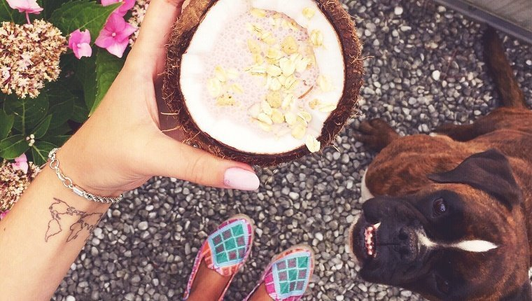 Low Section Of Woman Holding Coconut While Standing On Footpath With Boxer Dog