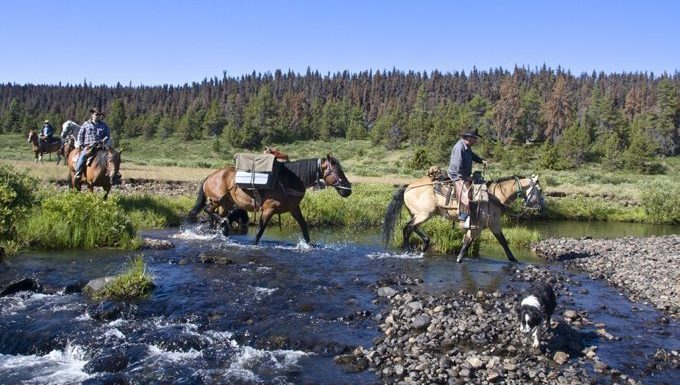 dog hiking with riders on horses