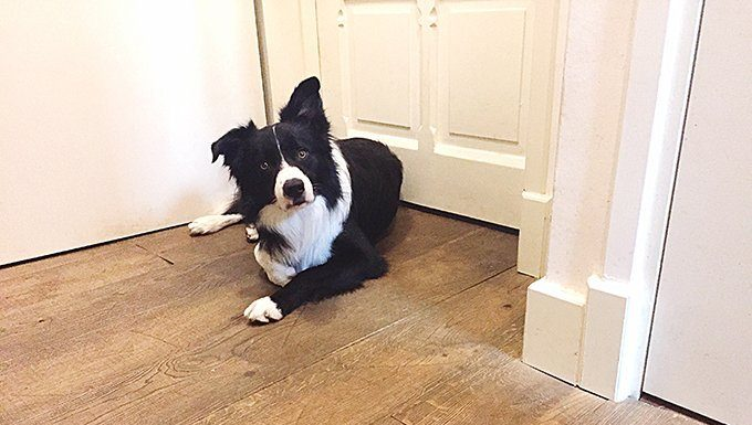 dog waiting by closed door