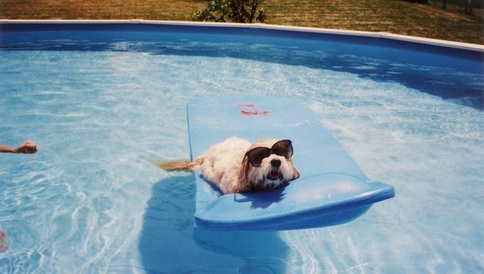 dog on a raft in the pool