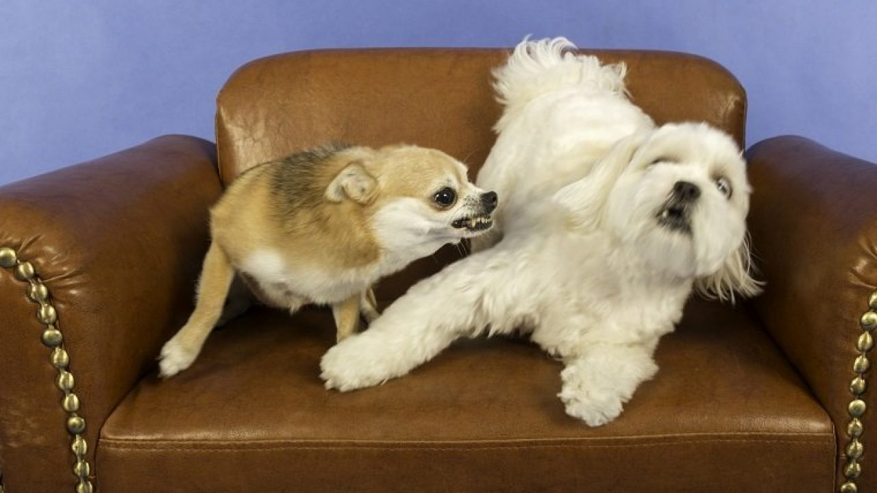 Dog Growling: What It Means And What You Should Do - Dogtime