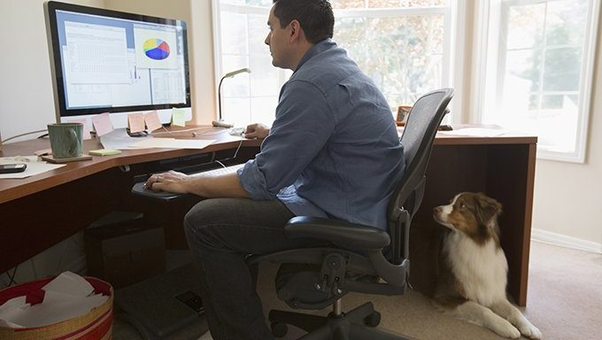 dog watches man work on computer