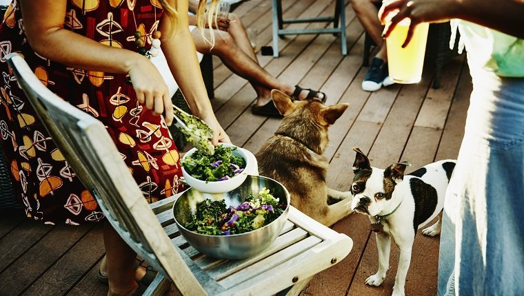 Woman serving salad to group of friends while dog watches on backyard deck on summer evening