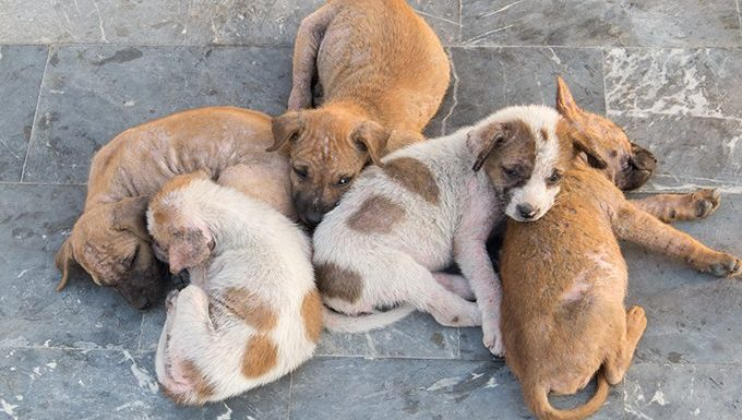 puppies who haven't been cared for