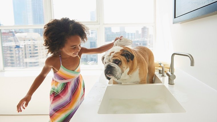 Dogs 101 Everything You Should Know About Bathing Your Dog Dogtime