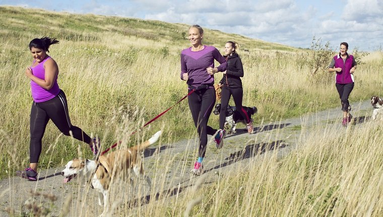 Group of female joggers running with dogs