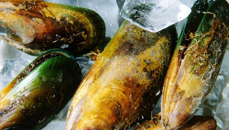 ice with green lipped mussels on top