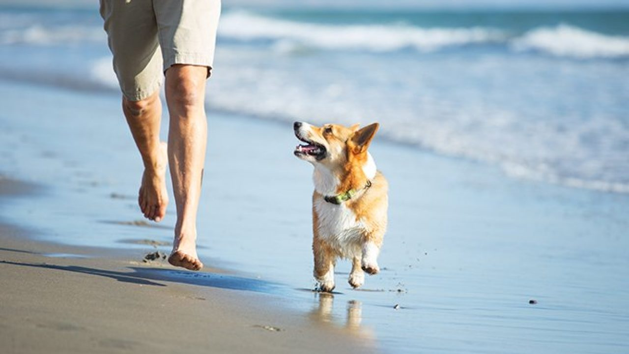 The 10 Best Dog Friendly Beaches in the U S  - Dogtime