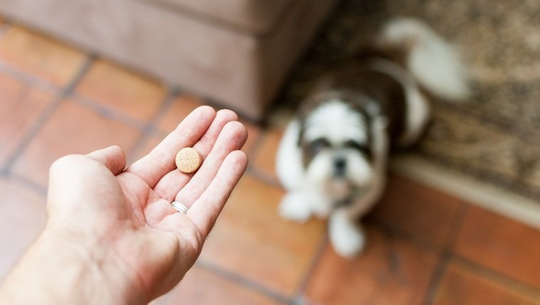 A pet owner's hand can be seen reaching out to give his dog a pill/tablet. The photo was taken from the pet owner's perspective, looking down at his Shih Tzu, who is expectendly looking up, and patiently waiting for his medication. The photo was taken in the home, as can be seen by the tile floor and rugs on the floor.