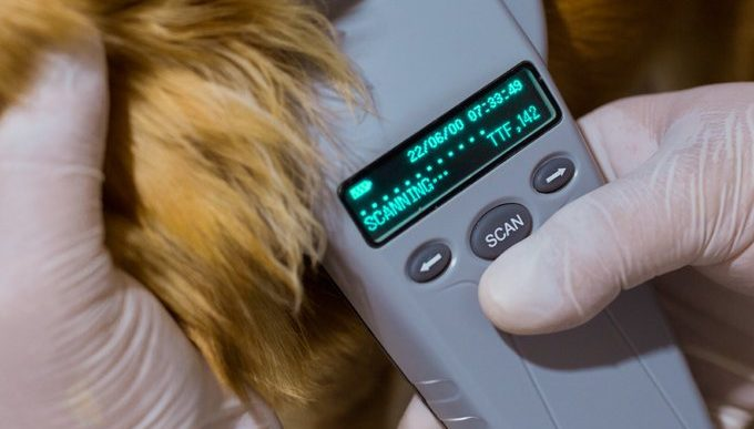 scanner reading a dogs microchip