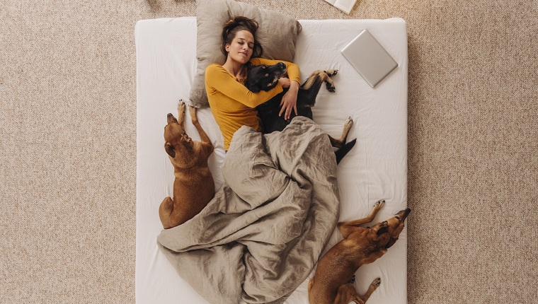Woman lying in bed with her dogs, cuddling