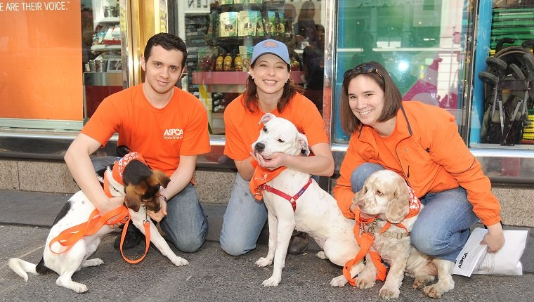 """NEW YORK, NY - APRIL 24: (L-R) Emery the Dog, Steve Krakowski, Nicole Stratton, Spirit the Dog, Michael the Dog and ? attend DYLAN'S CANDY BAR hosts """"Sweet Adoptions"""" for The ASPCA at Dylan's Candy Bar on April 24, 2010 in New York City. (Photo by BILLY FARRELL/Patrick McMullan via Getty Images)"""