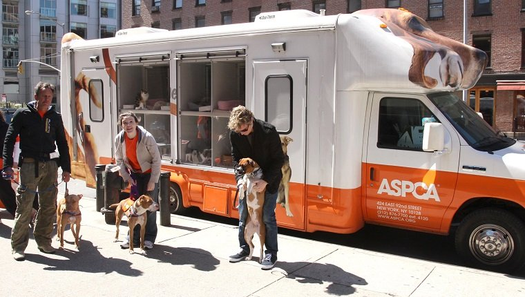 NEW YORK CITY, NY - APRIL 5: ASPCA Staff attends ADAM and ASPCA Host, ADAM LOVES DOGS at Adam on April 5, 2008 in New York City. (Photo by JIMI CELESTE/Patrick McMullan via Getty Images)