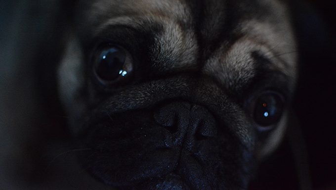 close up of dogs face and eyes