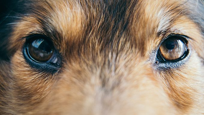 close up of dogs eyes