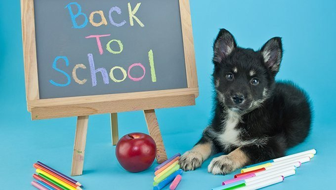 "dog sitting next to ""back to school"" message on blackboard"