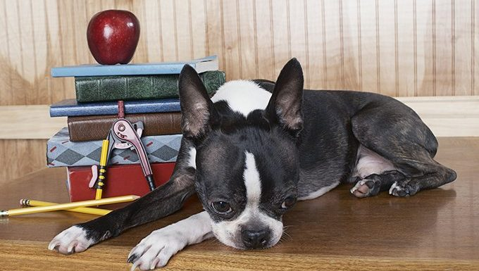 dog next to book and school supplies
