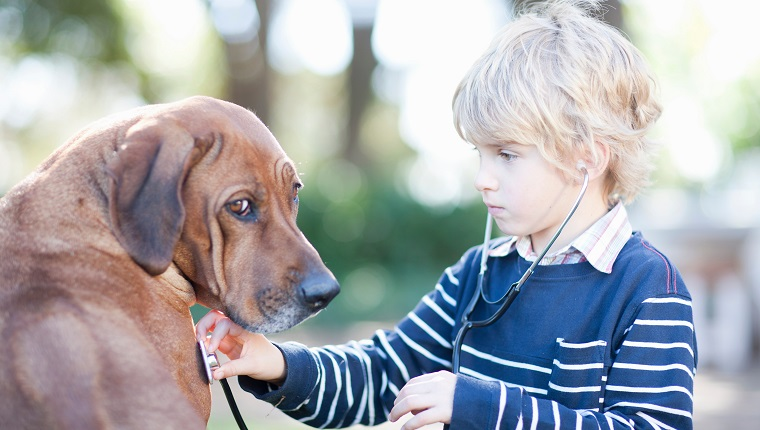 Boy using stethoscope on pet dog