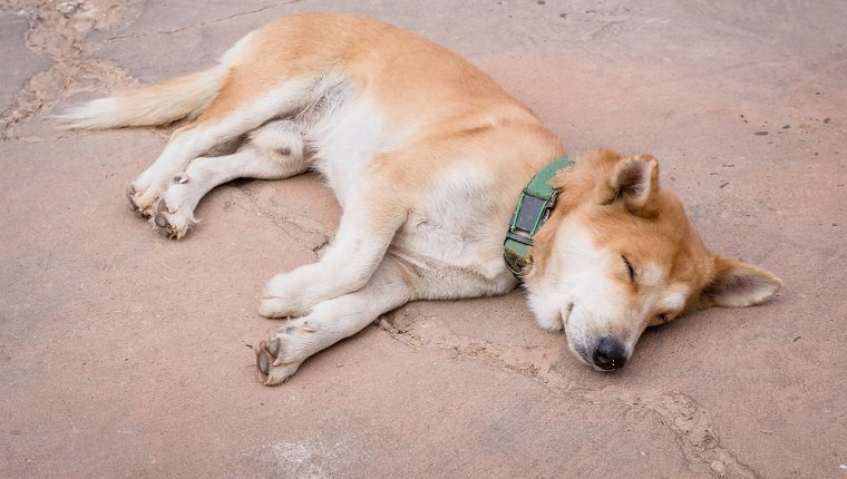 sleeping dog on cement floor