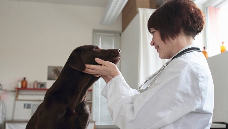 Female veterinarian examining dogs eyes in clinic