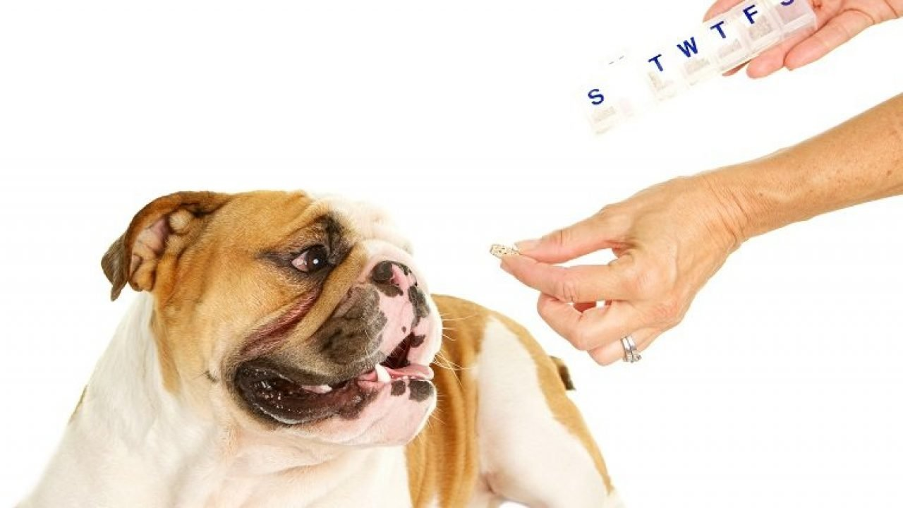 Levothyroxine For Dogs Uses Dosage And Side Effects Dogtime