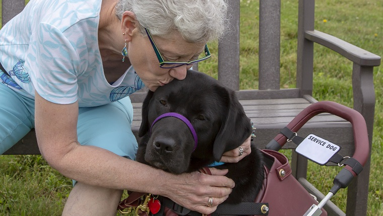 """A service dog named Lucee enjoys a kiss from her recipient during a three week """"team training"""" for this newly matched team. The service dog has been trained by Canine Partners for Life, a non-profit service dog training organization in Cochranville, PA, USA. The recipient has MS."""