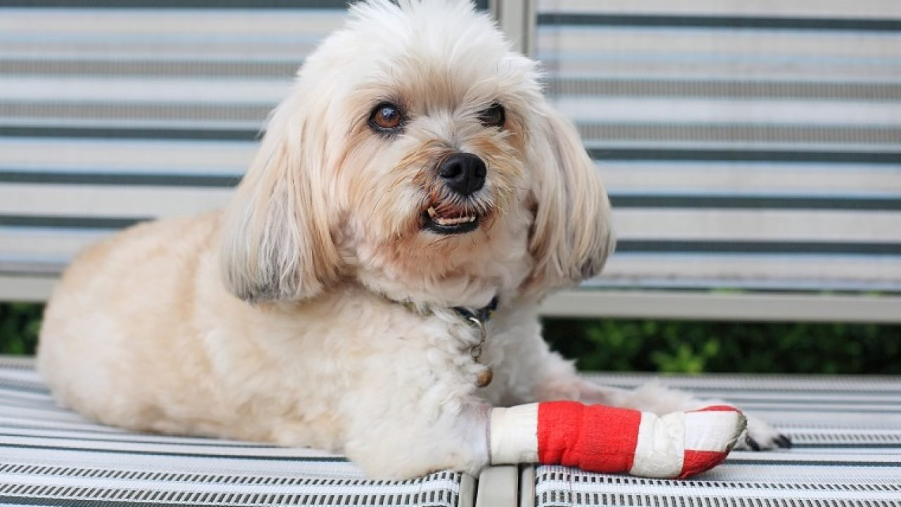 Squamous Cell Carcinoma In Dogs Symptoms Causes Treatments Dogtime