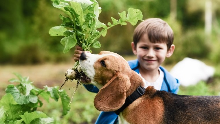 Little gardener and his dog