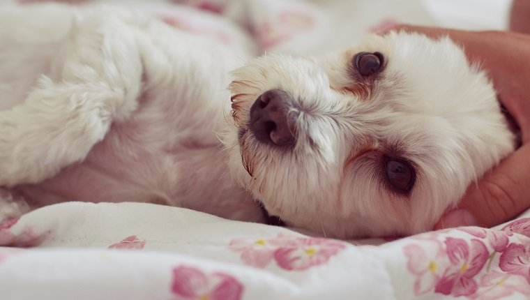 Close-Up Of Dog Lying Down
