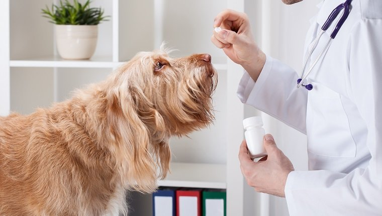 Dog during taking medicine from male vet