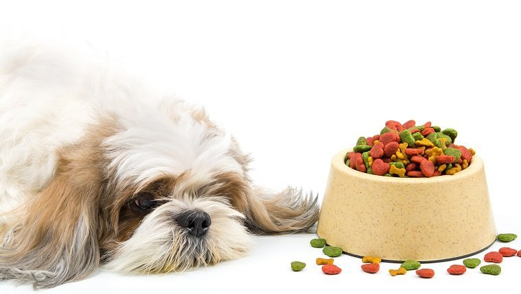 Dog be bored with dog foods ,Anorexia. Selective focus on food Pellets
