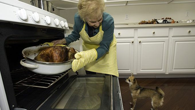 dog watching woman take turkey out of oven
