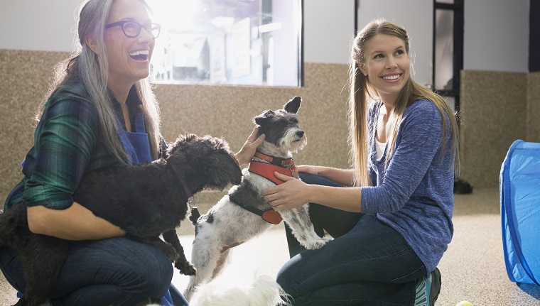 Dog daycare owners playing with dogs