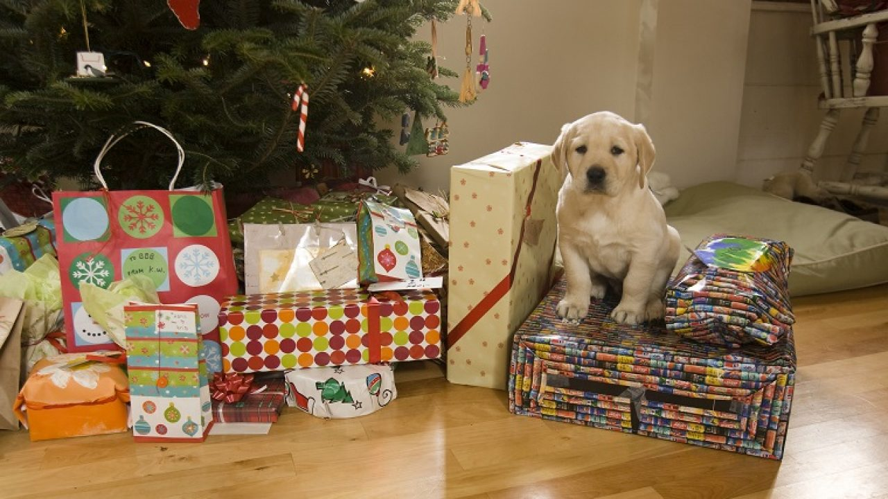 Christmas Puppies.Holiday Puppies A Nightmare After Christmas Dogtime