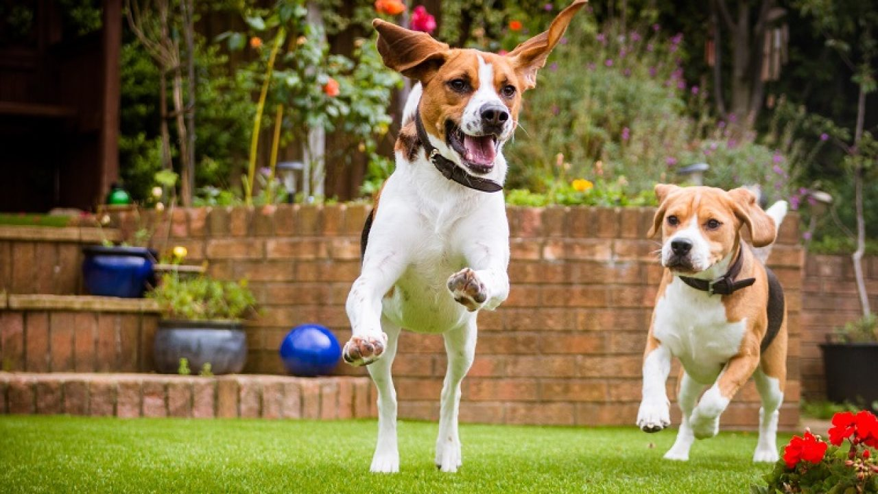 Top 7 Tips To Keep Your Yard Pet Friendly Dogtime
