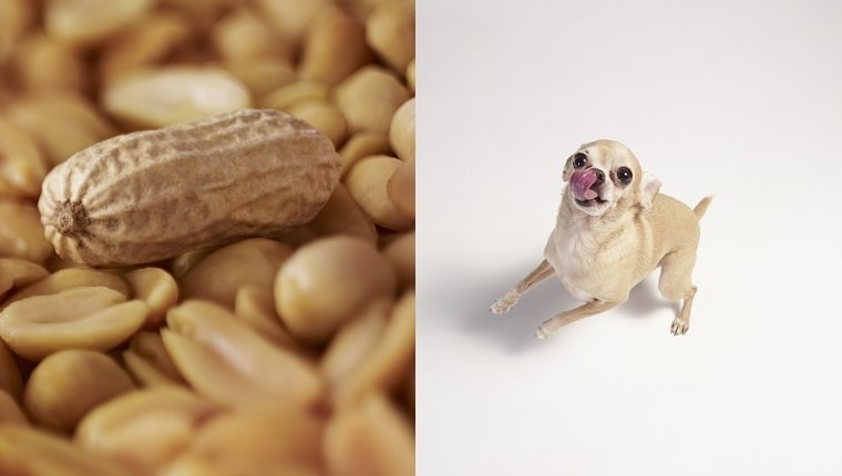 dog and peanuts