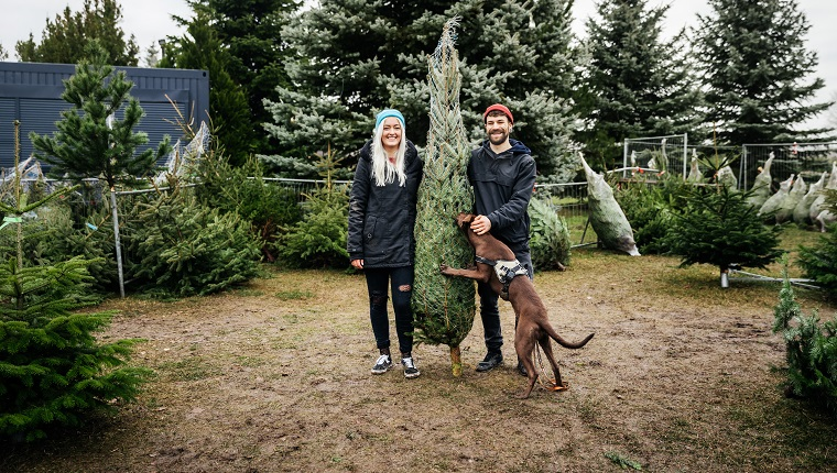 A young couple with a dog are stood outdoors, smiling and holding a freshly cut down pine tree wrapped in netting and ready to take home for christmas.