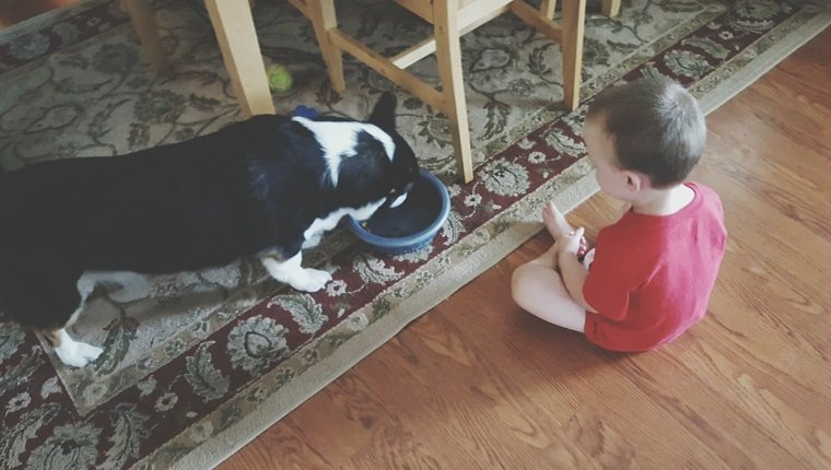 High Angle View Of Toddler Looking At Dog Eating Food From Bowl At Home