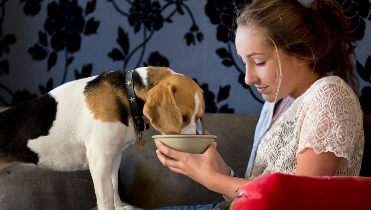 candid photograph, beagle bitch, teenage girl, sharing, England 2011,winter,country home