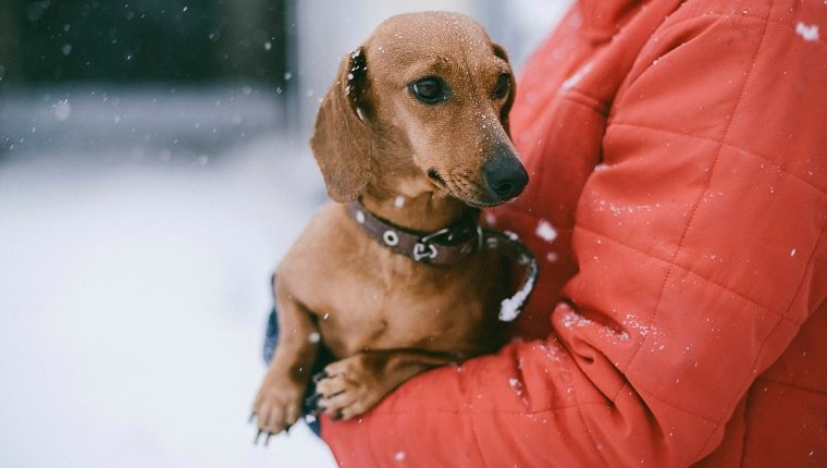 Midsection of woman with puppy standing outdoors during winter. Beware cold and flu medicines.