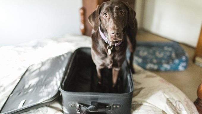 dog standing in suitcase ready to travel