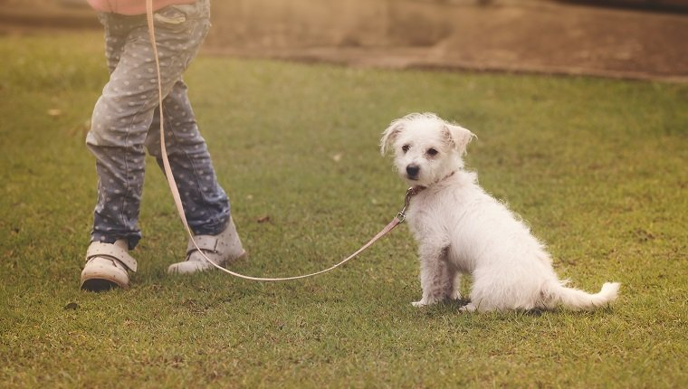 Dog Training: Walking On-Leash - DogTime