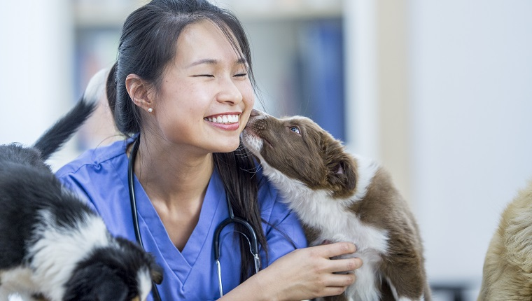 An Asian female veterinarian is indoors in a medical room. She is playing with two dogs on a table. One dog is licking her cheek.