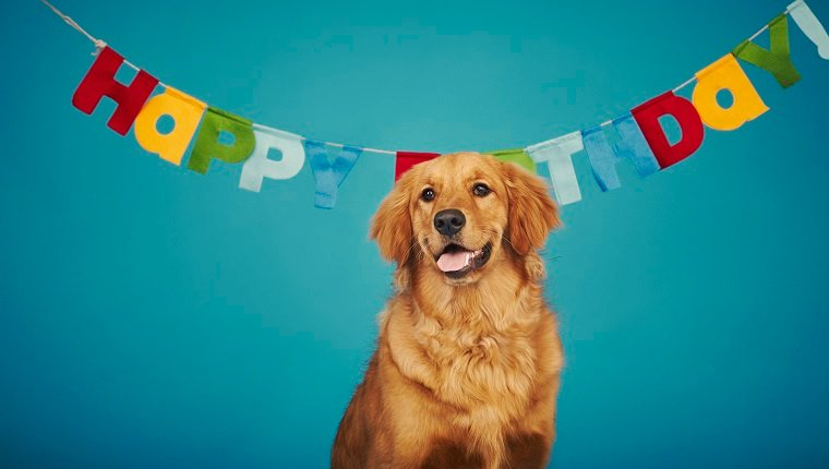 Golden retriever sitting in front of 'Happy Birthday' sign