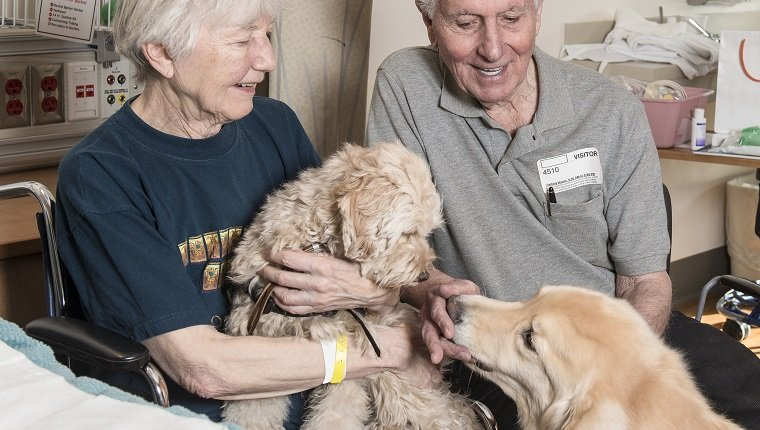 Caucasian couple enjoying therapy dogs
