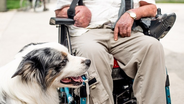 Dog As Therapy Animal For Disabled Senior Man