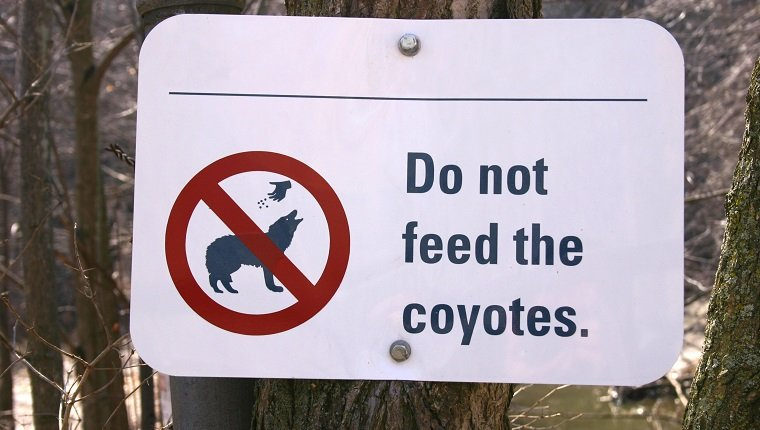 A Sign for coyote