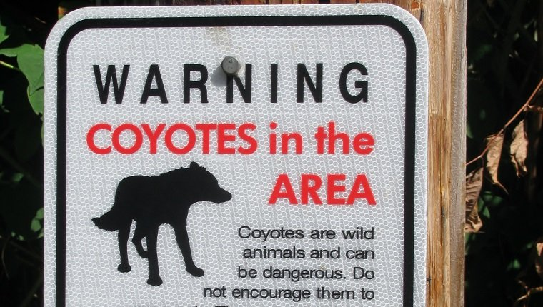 Coyotes in the area warning sign